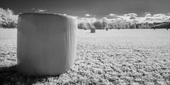 wy-yung-2270-ps-w (pw-pix) Tags: bale roundbale hay haylage plastic wrap wrapped fence crop pasture lucerne alfalfa cut baled paddock farm farming riverflats mitchellriverflats houses sky clouds walk walking cold autumn adaptedlens nikon142428afs nikkor1424mm128ged nikkor142428 nikon142428 bw blackandwhite monochrome sonya7 irconvertedsonya7 850nminfrared ir infrared alongthemitchellriver betweentheriverandthebackwater wyyung bairnsdale eastgippsland victoria australia peterwilliams pwpix wwwpwpixstudio pwpixstudio