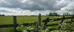 Walking in the neighborhood. (Digifred.nl) Tags: digifred 2019 nikon1j5 amsterdam nederland netherlands holland hff fencedfriday fence woodfence gras weiland hek meadow threateningclouds