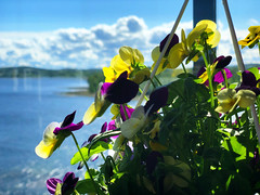Summer Morning at Home (pjen) Tags: home finland nordic lake highrise view water blue sky shore flowers balcony sunny summer morning fresh clean nature sun clouds flat