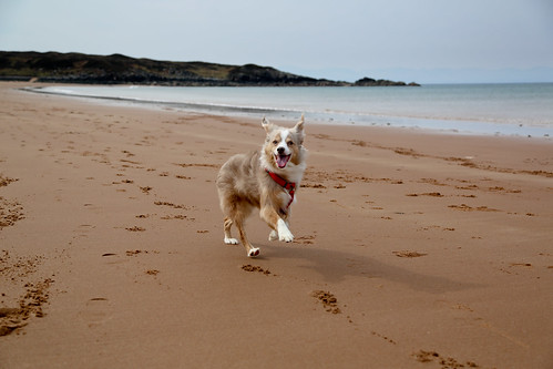 Laika in Red Point, Highland, Scotland