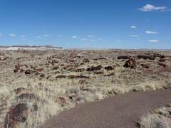 Long Logs (jb10okie) Tags: america usa arizona petrifiedforestnationalpark nps vacation travel trip spring 2018 nationalparks petrifiedforest hiking trails