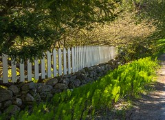White Picket Fence (Bud in Wells, Maine) Tags: spring fence light morning stonewall whitepicketfence