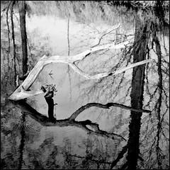 8ender (jo.sa.) Tags: natur lebensraum spiegelung wasser ast rollfilm bw schwarzweiss