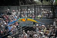 Flying ! (Sera69) Tags: oiseaux parc dombes rhônealpes ain ciel ailes plumes nature animaux vol vole volant