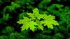 Niinisaari, East-Helsinki 🌴 (Esa Suomaa) Tags: helsinki suomi finland green forest trees tree saveourtrees spring summer europe scandinavia olympusomd