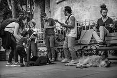 Musician, mother, child and the dog. (Erman Peremeci) Tags: sonya6500 youth carlzeiss streetmusic sonyalpha musicians kadıköy emount sokakfotoğrafı sonye streetphotography dog zeisstouit32mm bw music blackandwhite istanbul turkey touit1832