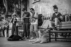 Musicians, bystander and the dog. (Erman Peremeci) Tags: sonya6500 youth carlzeiss blackandwhite sonyalpha musicians kadıköy emount sokakfotoğrafı sonye streetphotography dog zeisstouit32mm bw music streetmusic istanbul turkey touit1832