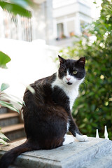 Old One Eye - 1 (Erman Peremeci) Tags: sonya6500 carlzeiss sonyalpha sonye pets touit1832 cat emount zeisstouit32mm istanbul cats animals kadıköy turkey