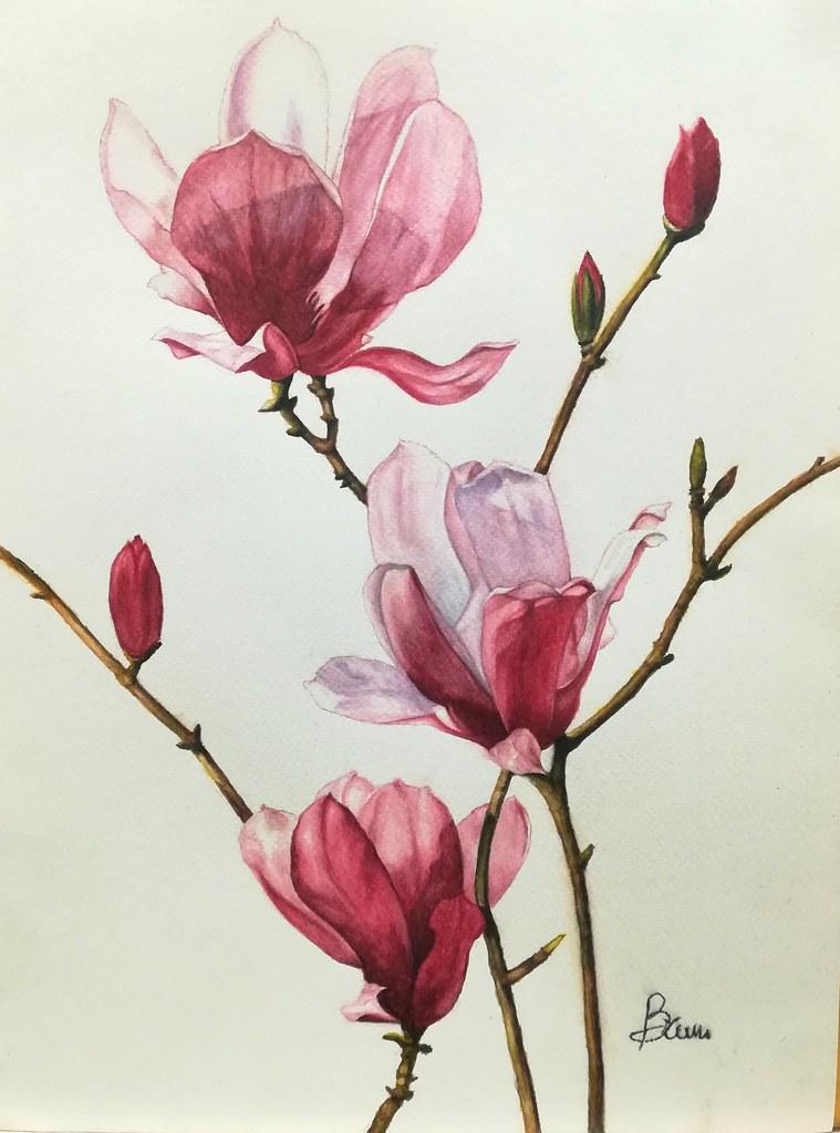 Fiori Watercolor.The World S Newest Photos Of Acquerello And Fiori Flickr Hive Mind