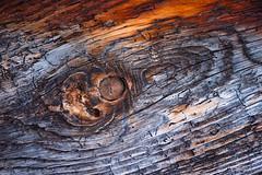Wood detail (werner.marx.kell) Tags: wood sigmadp3m foveon