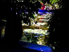 "Colors of Marrakech 14 (memories-in-motion) Tags: bokeh water silhouette gf3264mmf4rlmwr gf3264mmf4 garden marrakech marrakesh morocco marokko light shadow color architecture majorelle fujifilm ""gfx50r"" africa contrast"