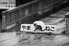 Rainy day - Iriomote Island, Okinawa, Japan (petrwag) Tags: sonycybershotdscrx100vi sonyrx100vi bw blackandwhite blancoynegro blackwhite japan japón japon noiretblanc noirblanc nihon nippon iriomote černobílé clickcamera