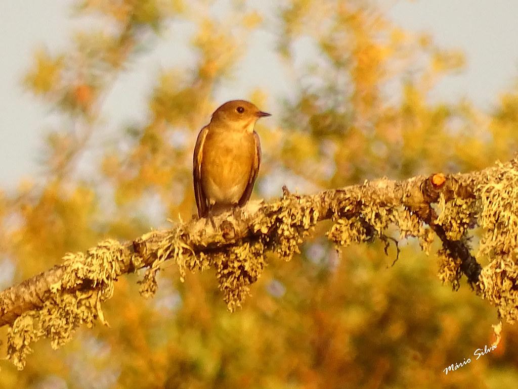 Águas Frias (Chaves) - ... ave atenta ao que se passa à sua volta ... será que estará a pensar escresver um texto descritivo da bela região onde vive (?)...