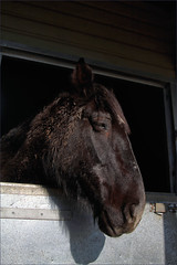 Sleepy Union (meniscuslens) Tags: horse trust retired cavalry stable buckinghamshire princes risborough high wycombe aylesbury