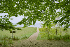 023765 Where The Dunes And Woods End (David G. Hoffman) Tags: framed lake lakemichigan leaves path beach beachgrass