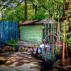 In An English County Garden (Missy Jussy) Tags: inanenglishcountygarden veryexcited greenhouse mygarden cottagegarden shed fence trees shrubs garden northwest england newhey rochdale shade shadows dappledlight iphone