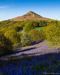 Roseberry Bluebells (Dave Snowdon (Wipeout Dave)) Tags: davidsnowdonphotography canoneos80d landscape northyorkshire northyorkmoors northyorkmoorsnationalpark roseberrytopping bluebells clevelandhills spring hill