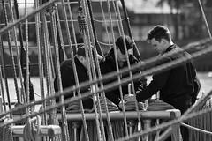 The Crew (michael_hamburg69) Tags: hamburg germany deutschland hafen harbour harbor schiff segelschiff vessel ship segelschulschiff trainingship мир mir besatzung matrose mannschaft sailor monochrome arbeitandeck