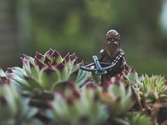 JS313761 (crosathorian) Tags: chewie chewbacca starwars lego