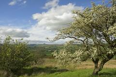 WeatherGap (Tony Tooth) Tags: nikon d7100 sigma 1750mm tree thorntree blossom gunhill countryside swythamley staffs staffordshire staffordshiremoorlands england
