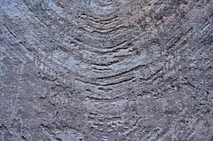 Textured (pjpink) Tags: carpet carpetschool elsultancarpetschool rug weaving textiles loom yarn giza egypt january 2019 winter pjpink 2catswithcameras