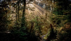 In the forest at Arthur's Pass. NZ (ndoake) Tags: