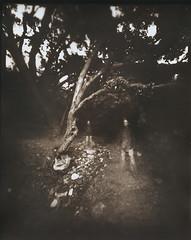 Garden Of Dreams (micalngelo) Tags: analog papernegative pinhole largeformatpinhole pinholecamera pinholephotography zeroimage sepiatoned lomography lomojunkie