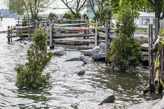 2019 Toronto flooding - Sunnyside May 31 2019 (jer1961) Tags: toronto flooding torontoflooding lakeontario lakeontarioflooding humberbay sunnysidebeach sunnysidebeachflooding