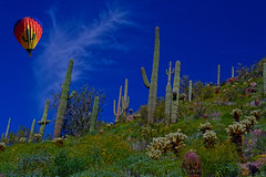 Serendipity (oybay©) Tags: arizona hot creek air balloon hotairballoon cave cavecreek cavecreekarizona blue cactus sky southwest color green nature colors clouds cacti spring colorful natural az essence cholla thirds bestinshow chollas