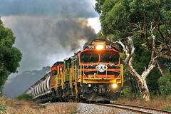 Going, going, gone......... (Bingley Hall) Tags: australia southaustralia eyrepeninsula transport train transportation trainspotting rail railway railroad locomotive engine diesel alco dl531 251b aegoodwin southaustralianrailways sar australiannational an geneseewyomingaustralia gwa narrowgauge 1067mm grain 905 railpage:class=135 railpage:loco=905 rpausada900class rpausada900class905 railpage:livery=39 wanilla