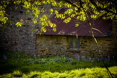 Morning (tonguedevil) Tags: outdoor outside countryside spring nature garden flowers foliage leaves farmhouse barn bluebells grass building colour light shadows sunlight sunrise morning fuji