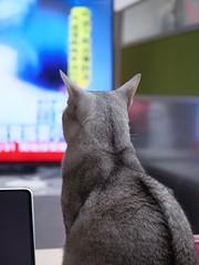 20190407_07_LR (enno7898) Tags: panasonic lumix lumixg9 dcg9 vario xvario 35100mm f28 cat abyssinian pet