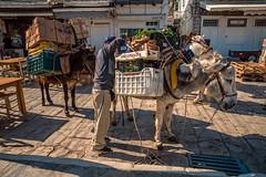 Traditional transport..... (Dafydd Penguin) Tags: donkey animal packhorse horse pack transport island greece saronic gulf eu europe man ydra harbour leica m10 21mm super elmar f34