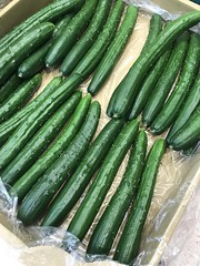 Fresh cucumbers in cardboard box - stock photo Yokohama, Japan May 23, 2019 (DigiPub) Tags: 1151173690 gettyimages