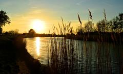 Greifswald - Ryck River Sunset (cnmark) Tags: deutschland germany mecklenburgvorpommern greifswald eldena sunset sonnenuntergang ryck river flus reflection spiegelung schilf ried reet reed ©allrightsreserved