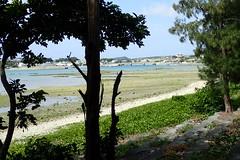 Le matin en s'éloignant de l'île d'Ou (8pl) Tags: plage rive mer japon okinawa promenade arbre ombre soleil maisons eau verdure pont marais ou