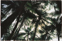 (grousespouse) Tags: vietnam 35mm analog film nikonseriese nikonseriese28mmf28 vision3 kodakvision250d analogue tropical scene beach vibes palmtrees travel grain wideangle cinematic cinemafilm colorfilm colourfilm argentique scanned croplab grousespouse 2019