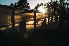 Garden (ewitsoe) Tags: 50mm canoneos6dii ewitsoe spring street poland urban wlodawa garden evening sunset silhouette country rural outdoors everydaylife moment farm farmer light lateintheday life living