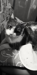 My sweet cat (Nabel Grant) Tags: kitten littlefriend littlepuppy sweetcat