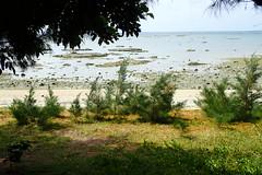 Le matin en s'éloignant de l'île d'Ou (2) (8pl) Tags: mer arbre ombre soleil plage eau matin japon okinawa verdure promenade océan cailloux calme repos
