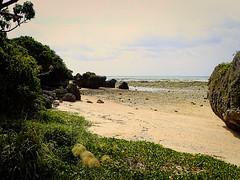 Le matin en s'éloignant de l'île d'Ou (3) (8pl) Tags: nature plage japon okinawa eau roche sable herbe végétation promenade arbre