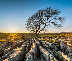 Lone Tree Sunset! (Nathan J Hammonds) Tags: uk england tree lancashire lone malham sunset sky sun landscape photography spring nikon rocks clear sunburst 15mm hdr irex benro