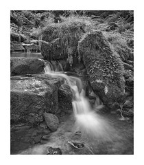 Black Beck 6x7 (Mark & Deborah Waddington) Tags: blackandwhite mamiya film mediumformat rb67 fomapan 2019060101 uk waterfall yorkshire ilkley