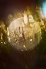 Stray Moment (pni) Tags: needles blur focus bokeh light bubble closeup macro multiexposure multipleexposure tripleexposure töölönlahti tölöviken helsinki helsingfors finland suomi pekkanikrus skrubu pni pni3xp