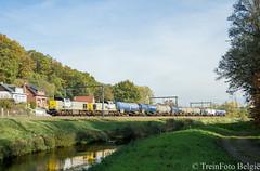 LINΞΛS 7781 Testelt (TreinFoto België) Tags: 7781 7778 lineas lijn 35 testelt belgië belgien belgium belgique dsm geleen lutterade antwerpennoord 2312 1093 cargo hkm 44621