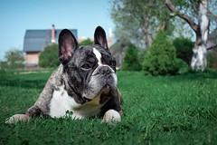 What's up man? (lana.graal) Tags: dog landscape grass countryside russia nature spring собака природа трава весна россия пейзаж