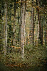 Forest goals (desomnis) Tags: forest wienerwald viennawoods nature trees 135mm canon135mmf20 canon135mm canon5dmarkiv 5d canon5d canon desmonis pressbaum niederösterreich loweraustria austria österreich autumn autumnleaves