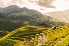_Y2U0118-20.0915.La Pán Tẩn.Mù Cang Chải.Yên Bái (hoanglongphoto) Tags: asia asian vietnam northvietnam northwestvietnam landscape scenery vietnamlandscape vietnamscenery vietnamscene terraces terracedfields terracedfieldsinvietnam harvest sunlight sunny afternoon hill hillside house afternoonsunny tâybắc yênbái mùcangchải lapántẩn ruộngbậcthang phongcảnh ruộngbậcthangmùcangchải lúachín mùagặt mùcangchảimùalúachín buổichiều nắng nắngchiều ngọnđồi sườnđồi ngôinhà canon canoneos1dx seasonharvest northernvietnam mùcangchảimùagặt mâmxôilapántẩn ef35mmf14lusm ray ráy sunray tianắngmặttrời sky bầutrời