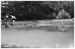 Staufen-0005ba (r_walther) Tags: 125asa ilford linhof monochrom perceptol20min13 schwarzweiss technika bergmatte wald weiher schafisheim kantonaargau schweiz
