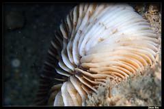 Baie des Citrons 30.05.2019 (CurLy98800) Tags: noumea baie des citrons nouvelle calédonie new caledonia plongée diving snorkeling pmt corail lagon poisson underwater sous marine